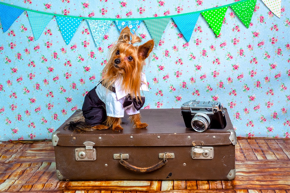 How To Get an Airline Approval to Travel with Your Pet?